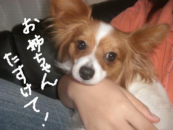 nikikixyuy3.jpg
