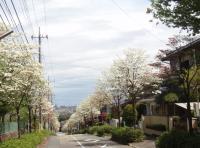 hanmizuki-1.jpg