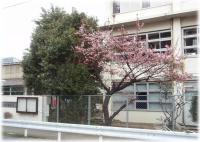sakura-2008-2-11.jpg