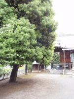 yamamomo-1_20080622133150.jpg