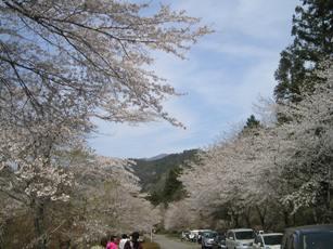 寺尾ヶ原千本桜公園1