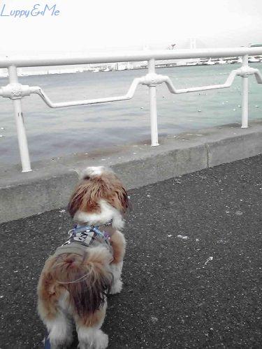 海を見ているLuppy