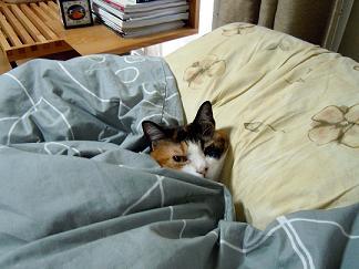 あっ、キタ!