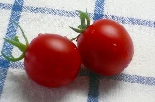 ど根性プチトマト