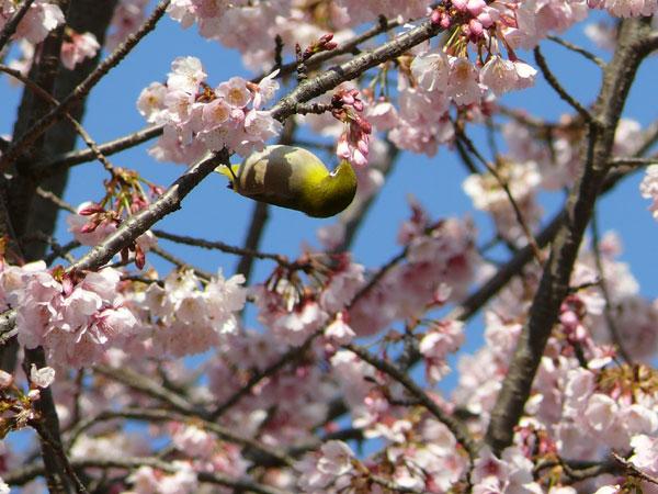 春だねぇ~