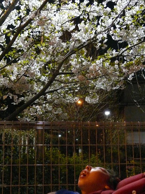 夜桜と姫~