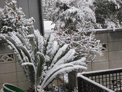 IMG_4468 10 積雪2cmの発表