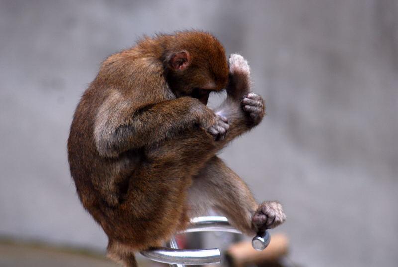 上野のお猿さん