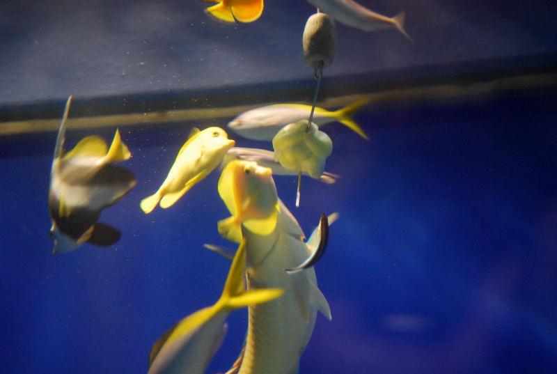 海遊館の生き物達1