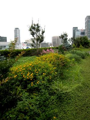 大阪市庁屋上庭園01