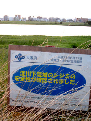 淀川シジミ01