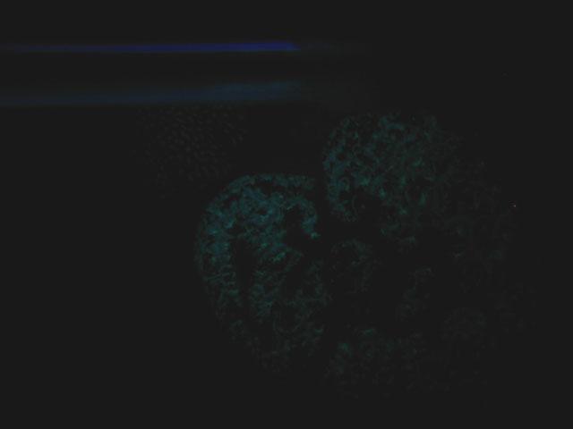 2レ★光るサンゴ32