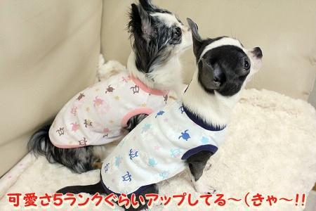 NEWお洋服 (3)