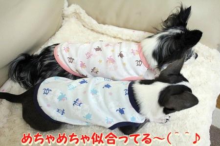 NEWお洋服 (6)