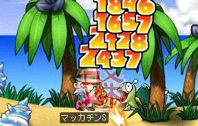 Maple6779a.jpg