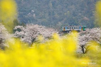 D7A_2500春色列車m