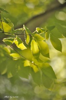 D7A_4031新緑の朝m