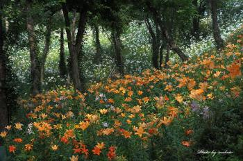 D7A_5225庭園m