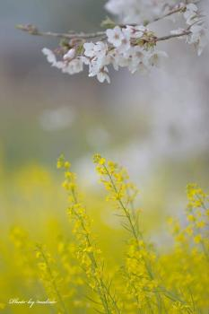 D7A_2137spring-has-come!m.jpg