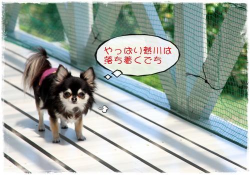109_20110509212543.jpg