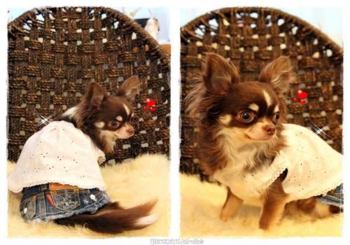 choco_20110614215642.jpg