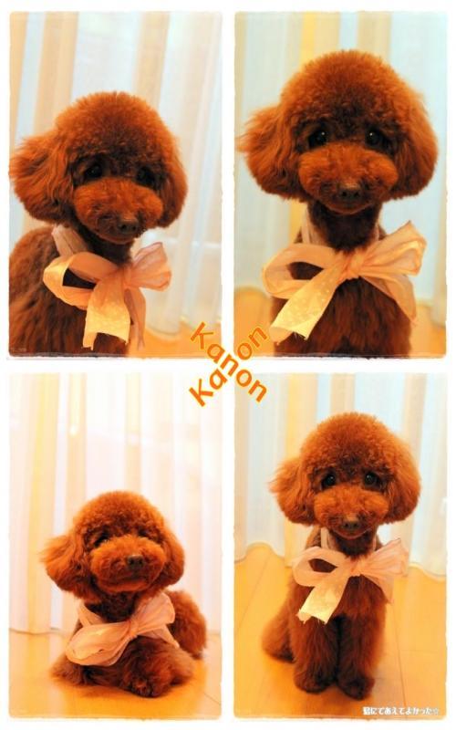 kanon_20110529211232.jpg