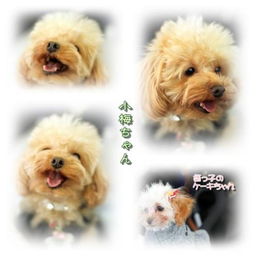 koume-chan2.jpg