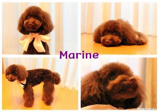marine_convert_20110529211046.jpg
