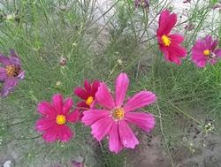 2011-0831-173649097-crop.jpg