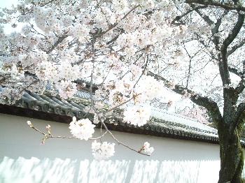 2006_04060011.jpg