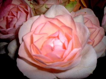 2006_05210006.jpg