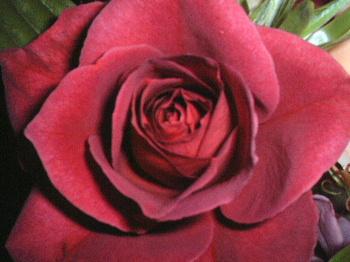 2006_05210008.jpg