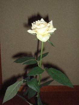 2006_08130001.jpg