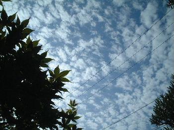 2006_08310027.jpg