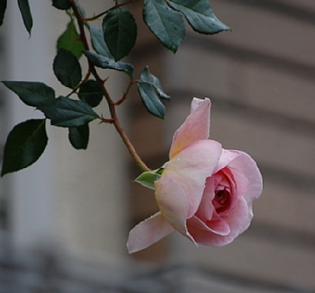 'アブラハム・ダービー'3 2008.10.25撮影