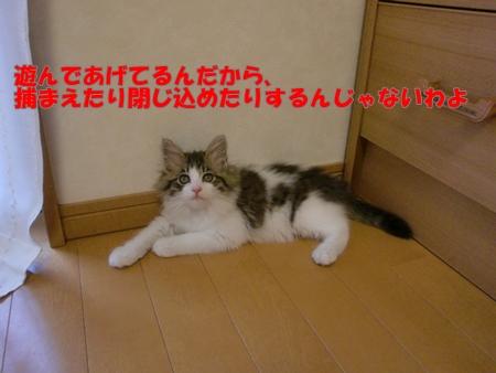CIMG2274.jpg