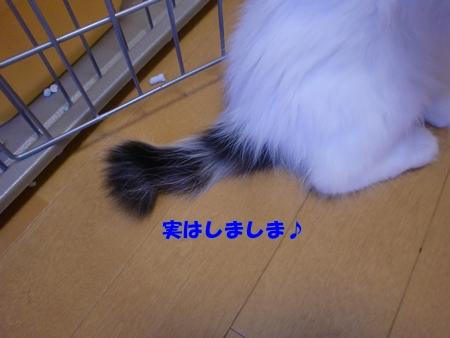 CIMG2391.jpg