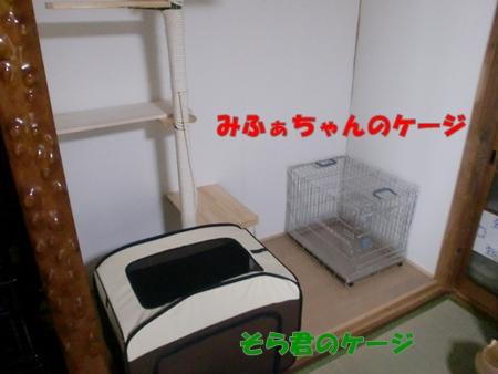 CIMG2752.jpg