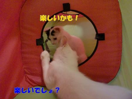 CIMG2976.jpg
