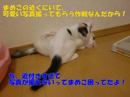 CIMG3163.jpg