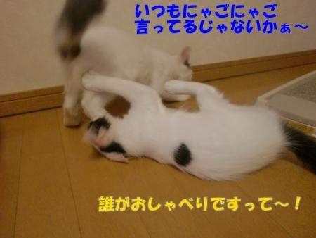 CIMG3164.jpg
