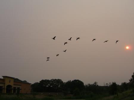 geese1s_convert_20080911100521[1]