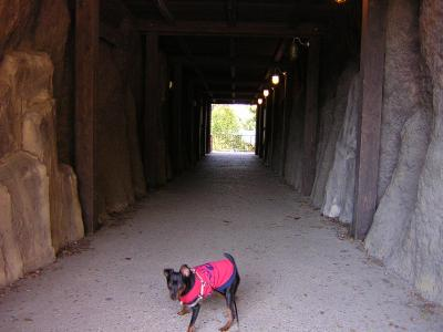 4トンネル
