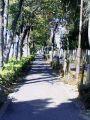 環八の歩道 春