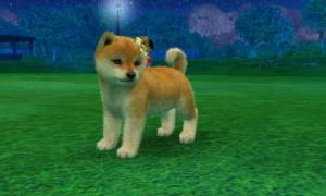 dogs0490.jpg
