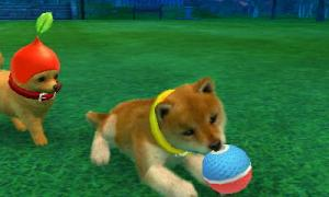 dogs0492.jpg