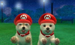 dogs0501.jpg