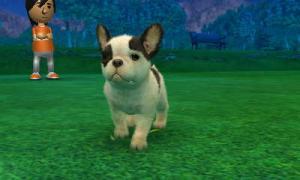 dogs0502.jpg