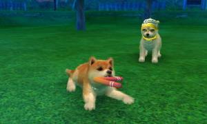 dogs0508.jpg