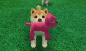dogs0517.jpg
